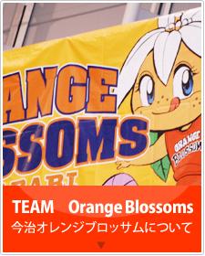 今治オレンジブロッサムについて